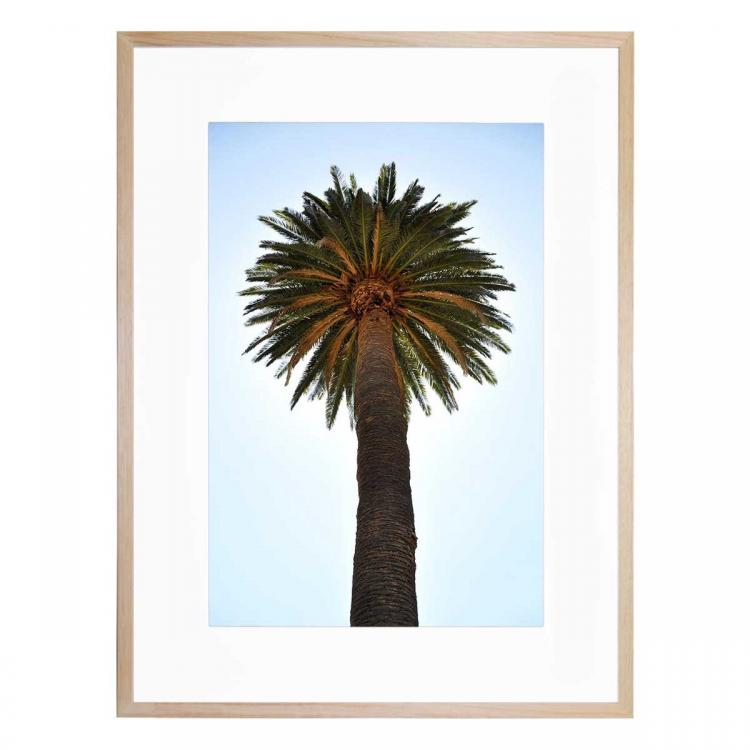 Big Palm Tree - Print