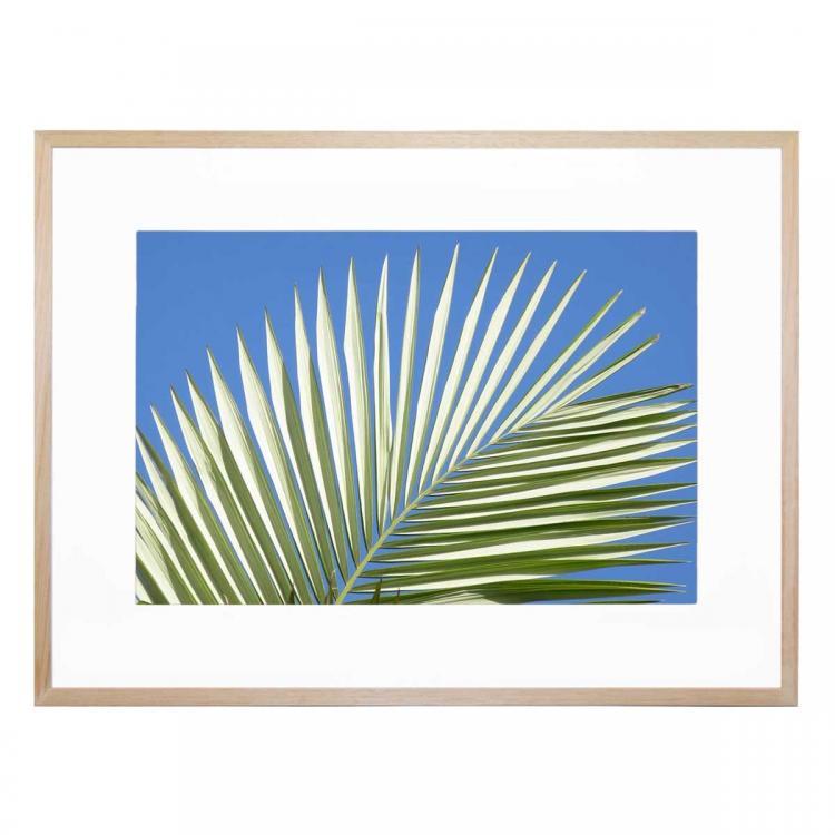 Palm Leaf Fan - Print