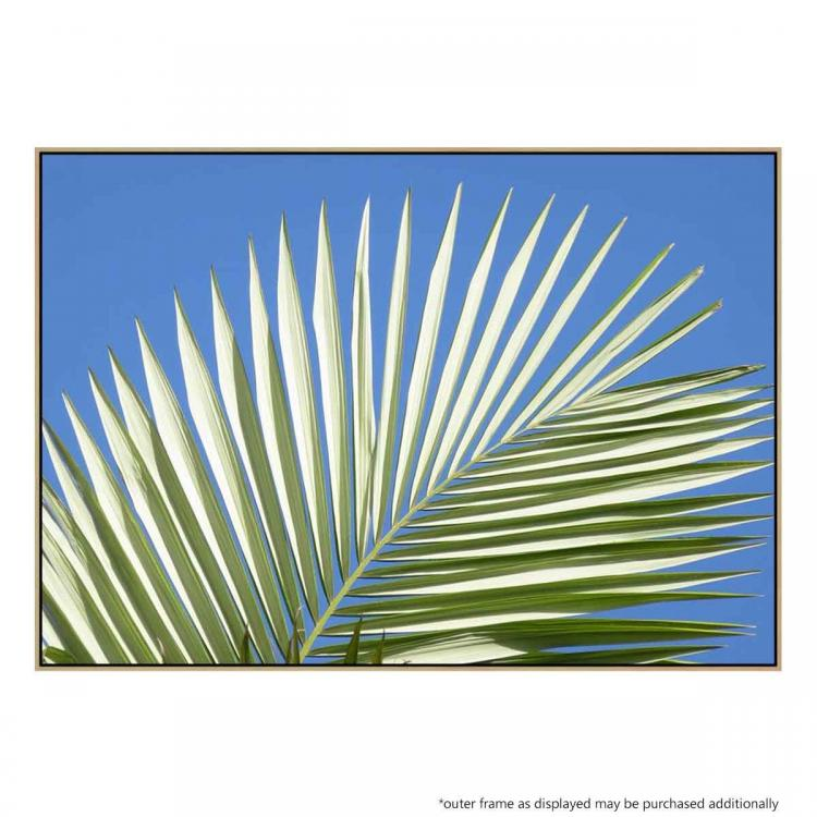 Palm Leaf Fan - Print