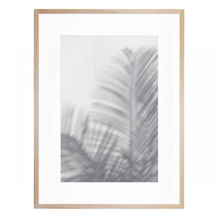 Palm Shadow - Print