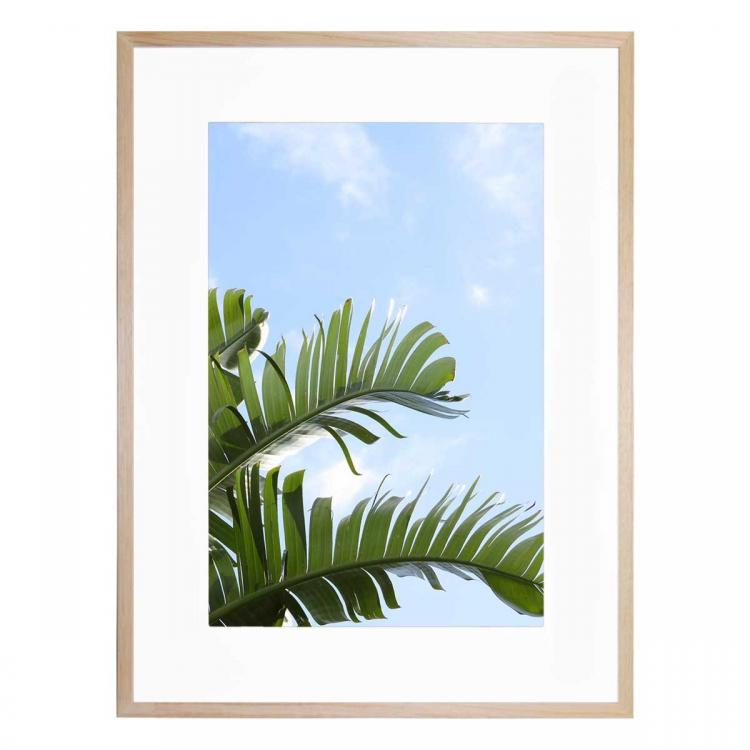 Tropical Leaf - Print