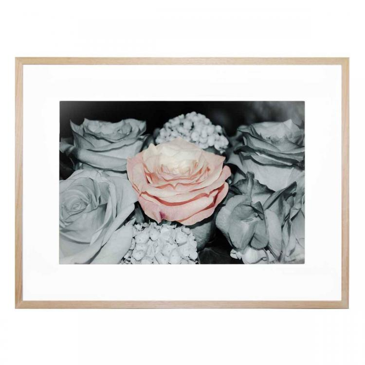Amore Rosato - Print