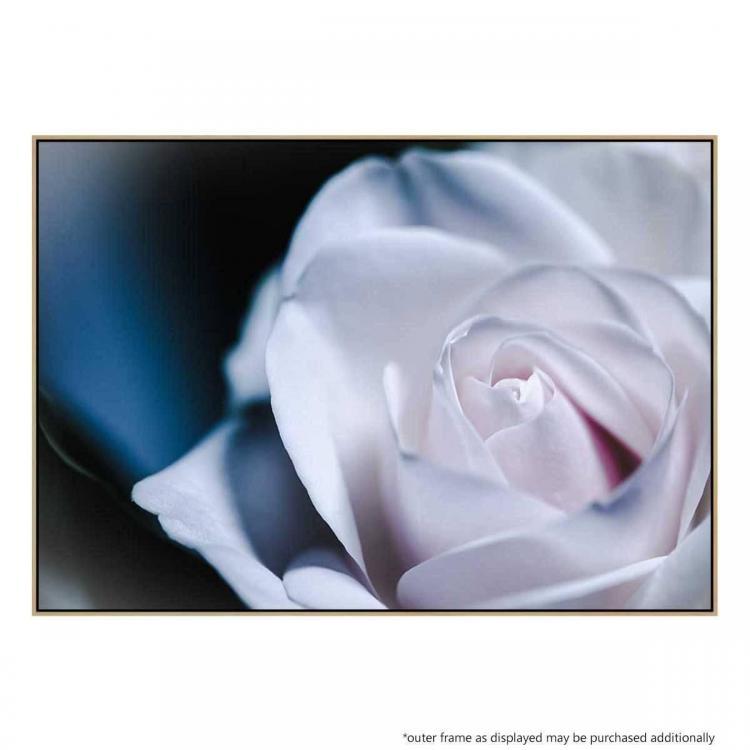 Rosa Dulce - Print