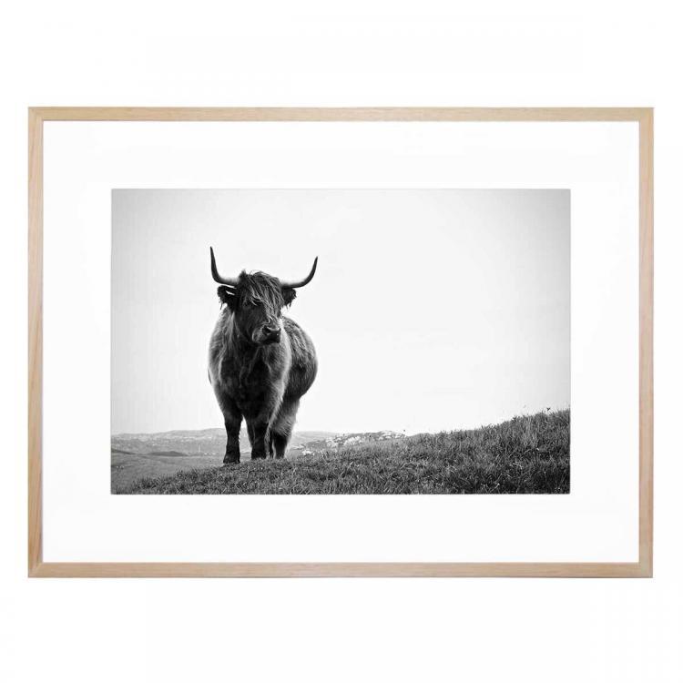 Highland 1 - Print