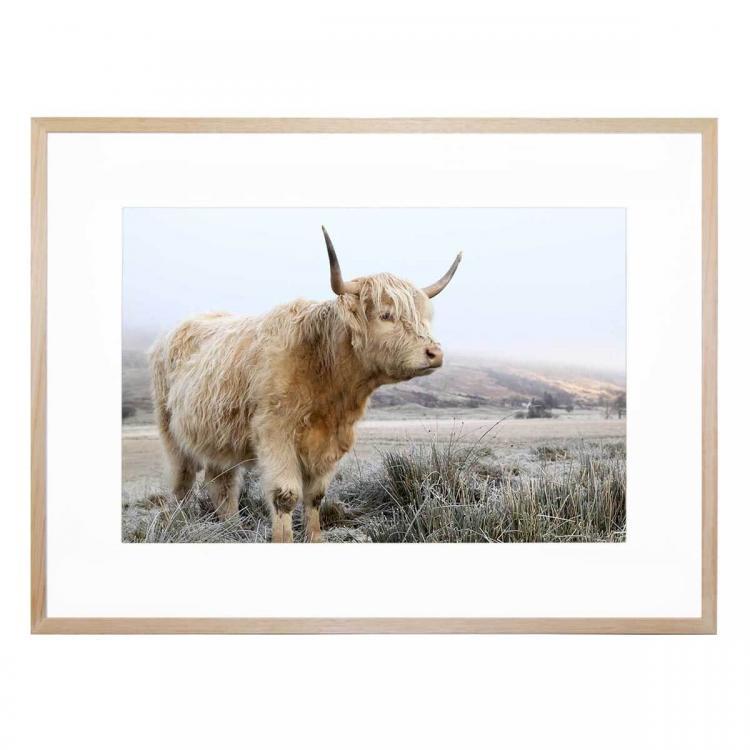 Highland 2 - Print