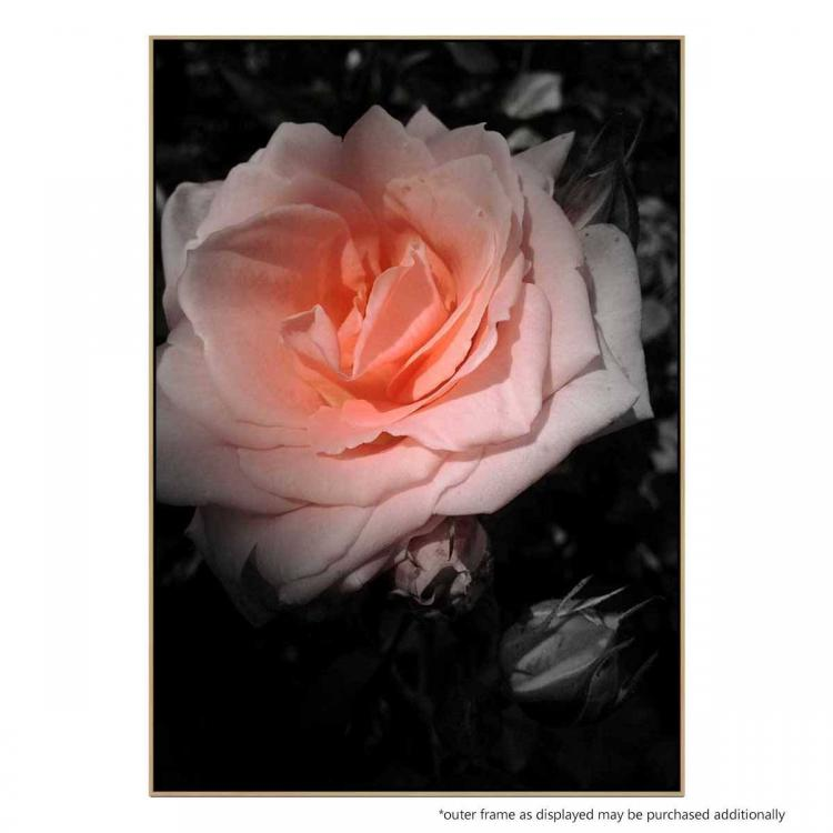 Aranciata Bloom - Print