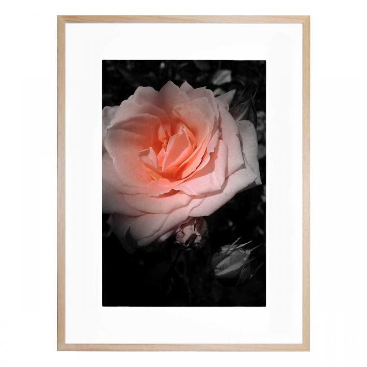 Aranciata Bloom