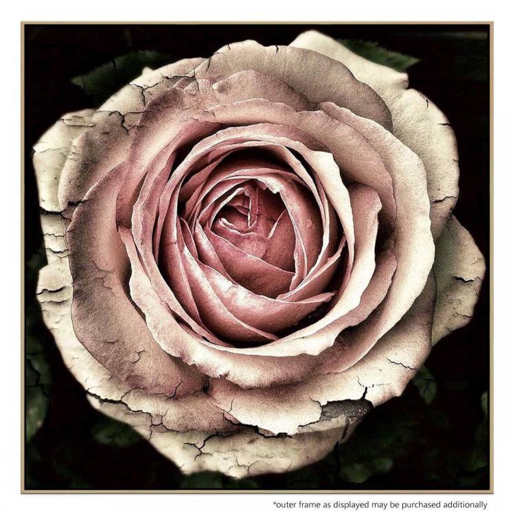 Timeless Rose - Print