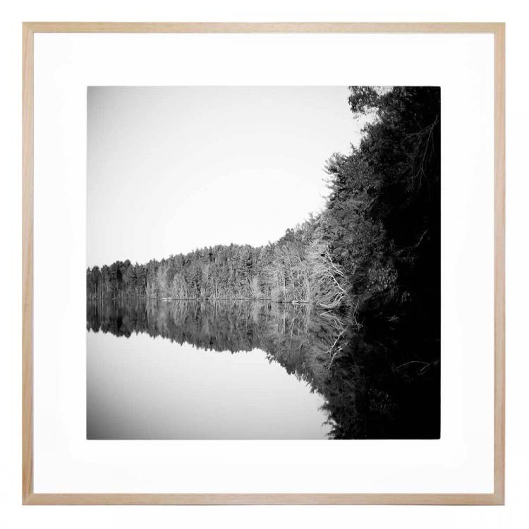 Trees And Lake - Print