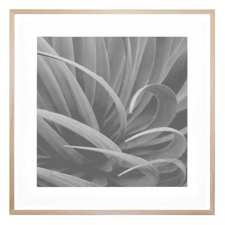 Aloe Curl - Print