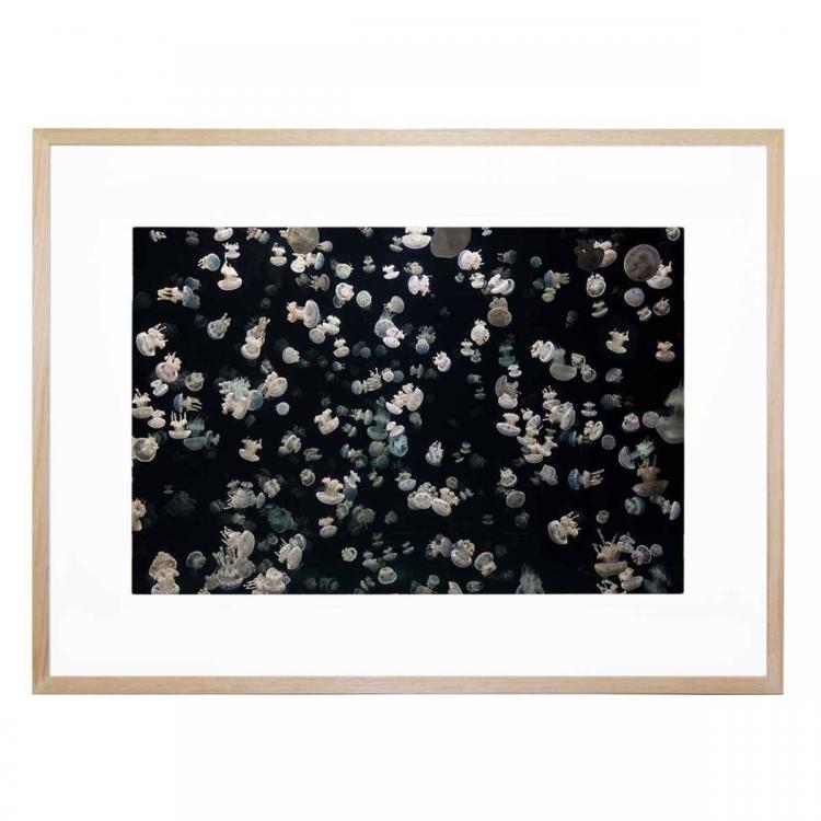 Jellyfish Bloom - Print