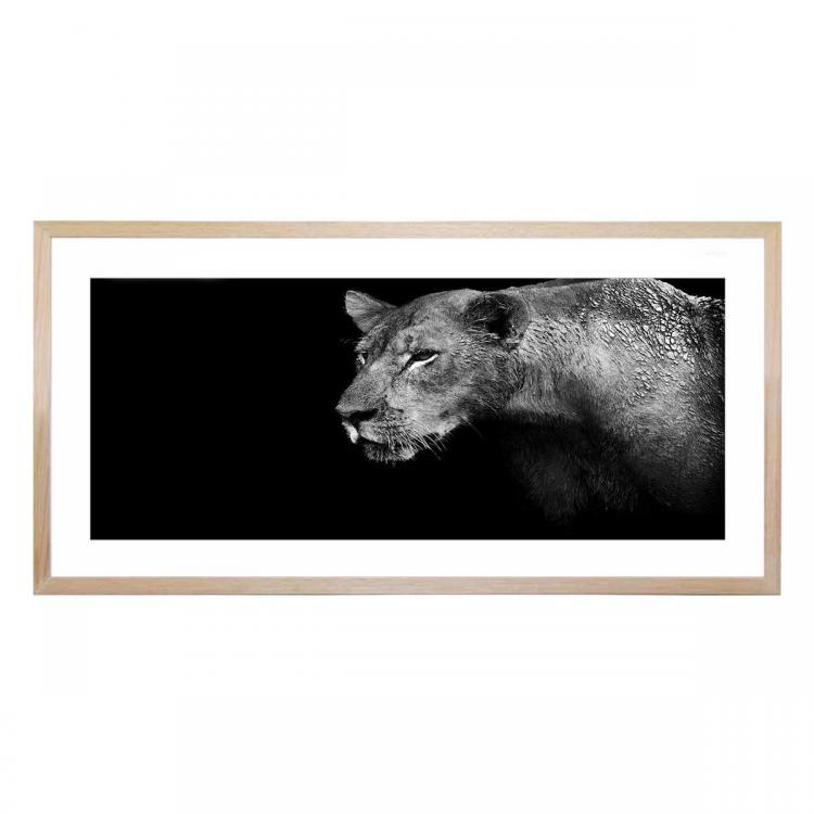 Feline Stare - Print