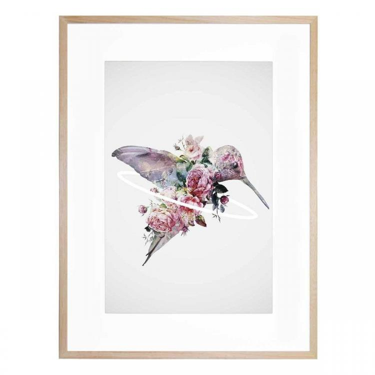 Kolibri - Print