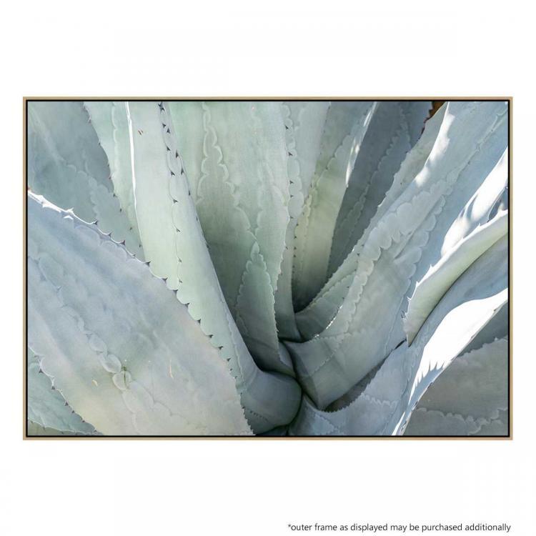 Aloe - Print