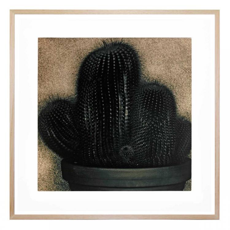 Cactus 1 - Print