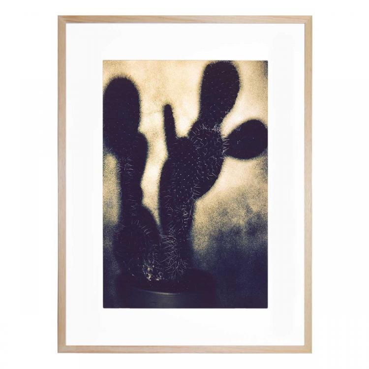 Cactus 2 - Print