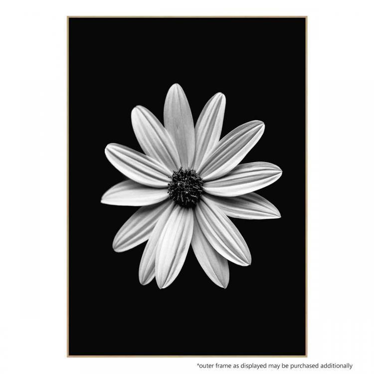 Bianco Daisy - Print