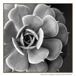Cacti Noir - Print