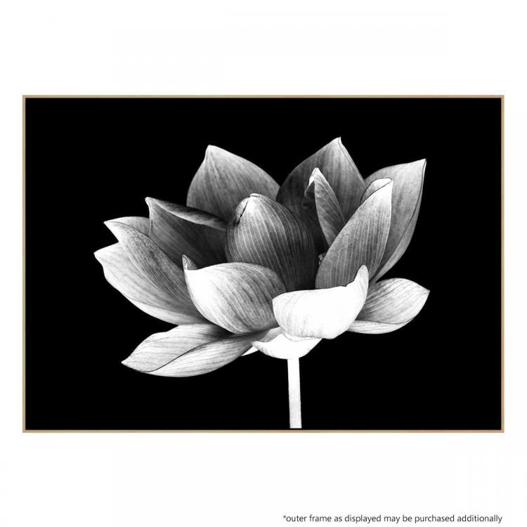Lotus Me - Print