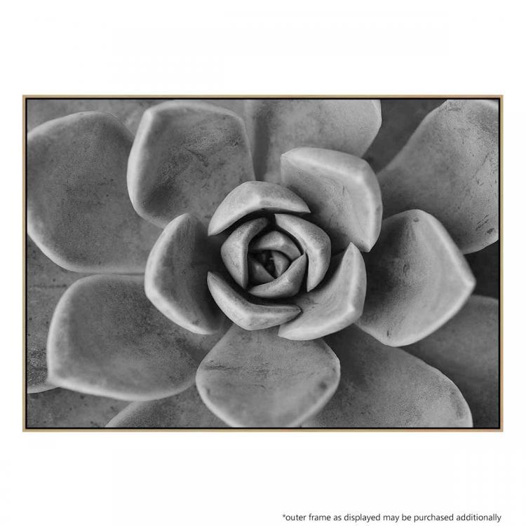 Succulent Wish 2 - Print