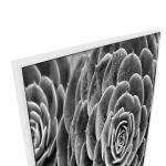 Succulent Wish - Print
