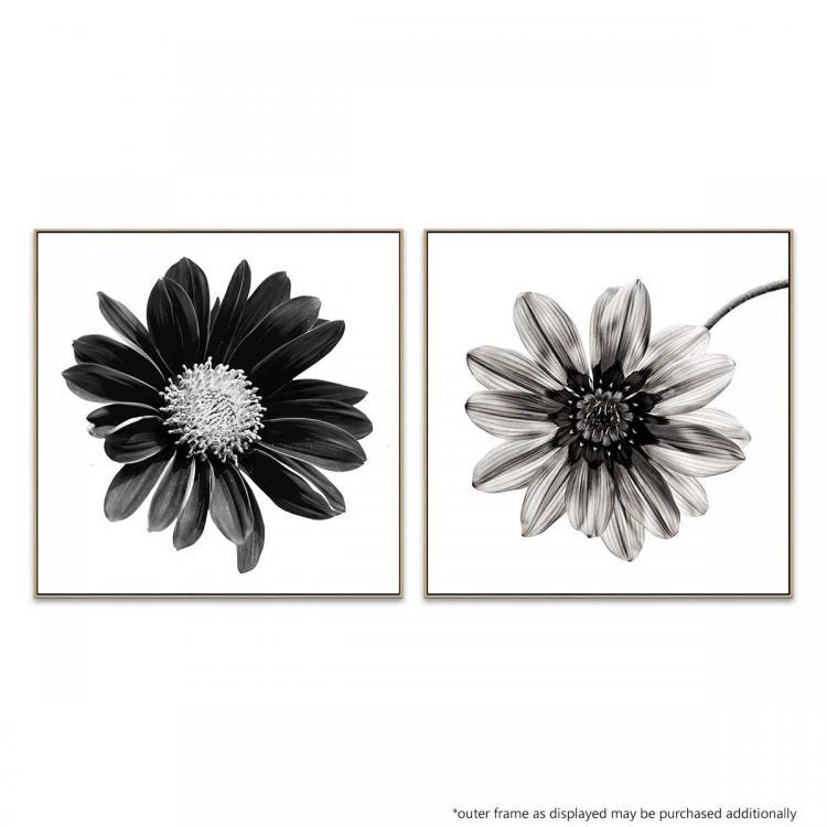 Gerbera Noir - Mono Fiore - Print