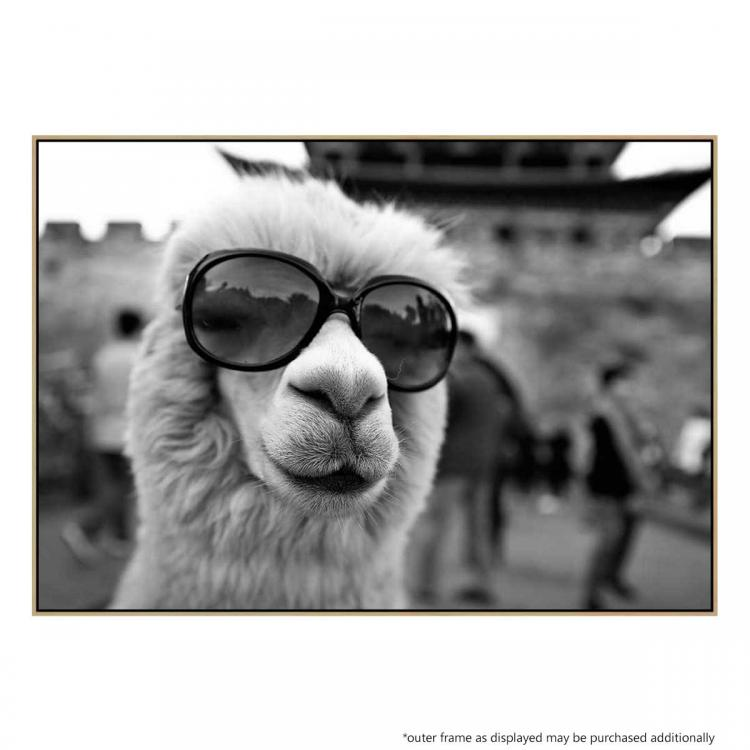 Llama In Disguise