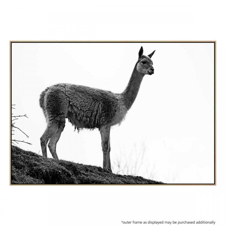 Llama Luxe