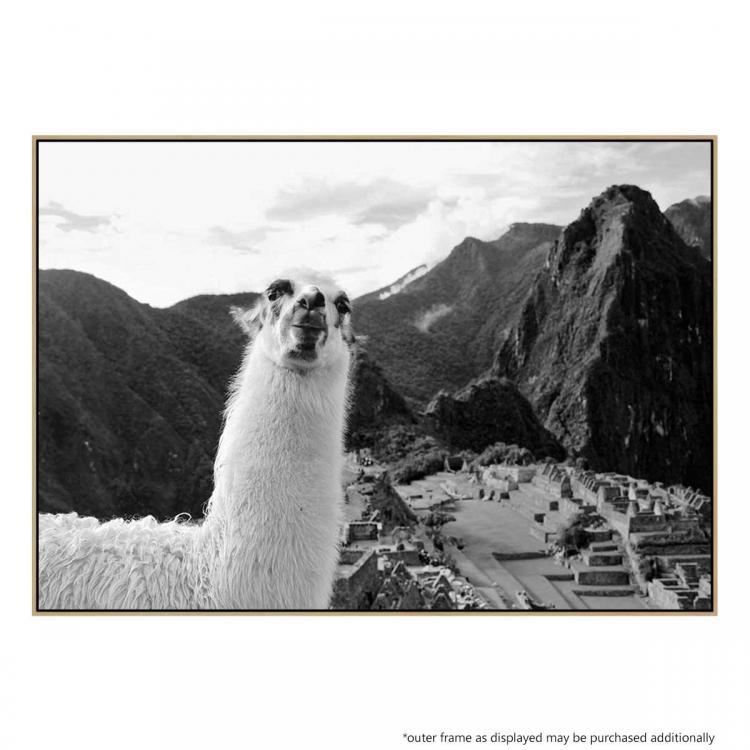 Llama Selfie