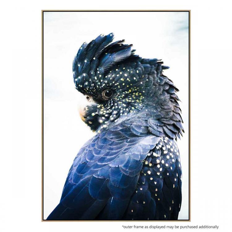 Cockatoo Blue