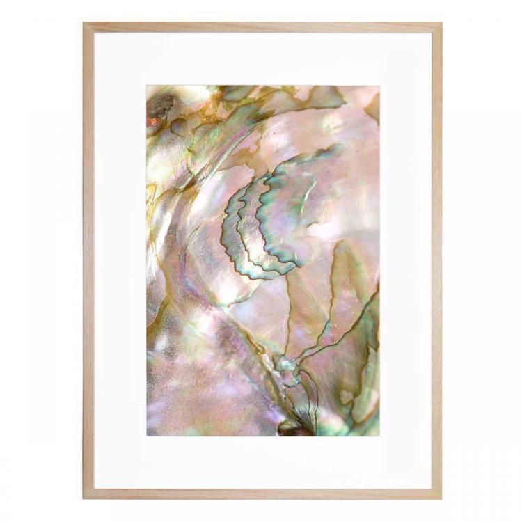 Abalone Shell - Print
