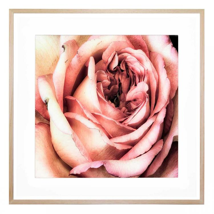 Rosato Bloom