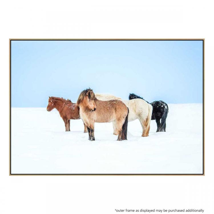 Horses In Color - Print