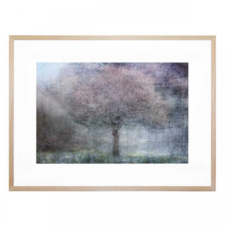 Magic Of Spring - Print