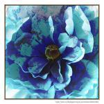 Blue Flower - Print
