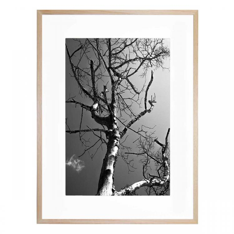 Branches - Print