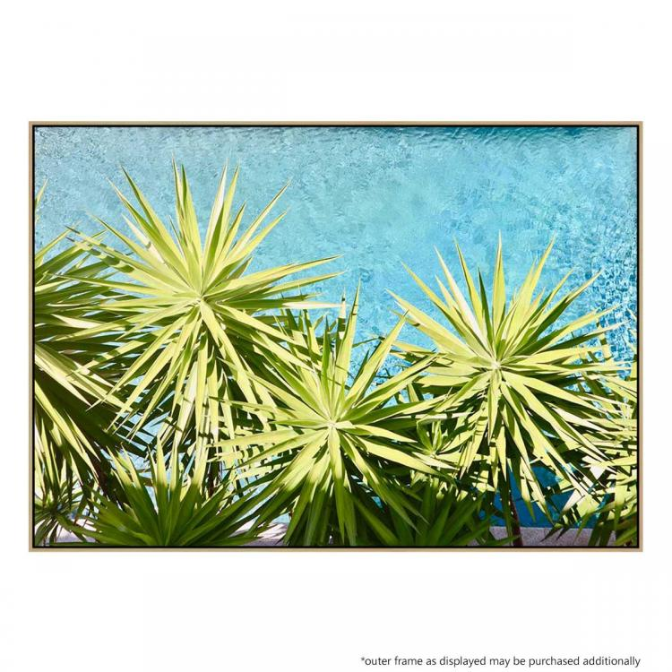 Pool Palms In Noosa - Print