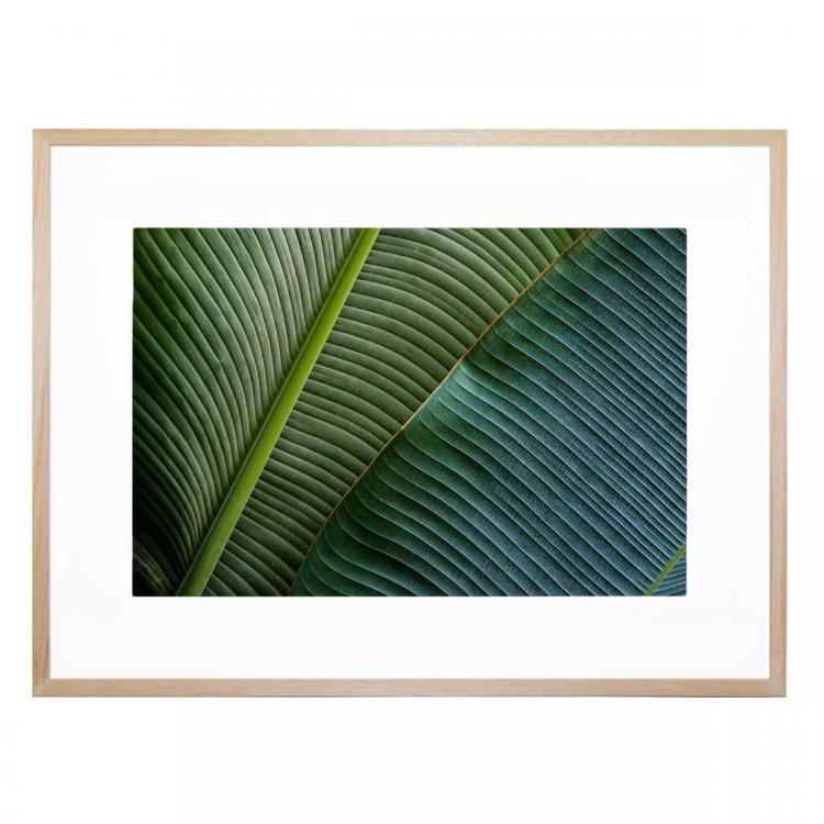 Two Leaves - Print