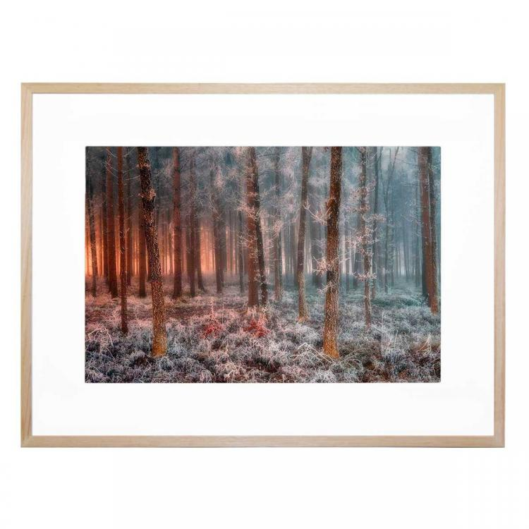 Frost Before Sunrise- Print