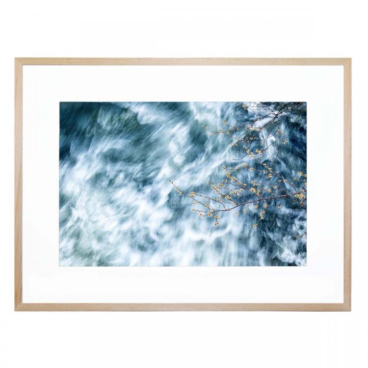 Blossom In A Storm - Print