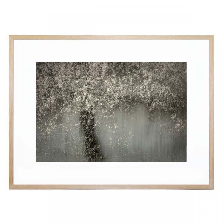 The Forrest Effect - Print