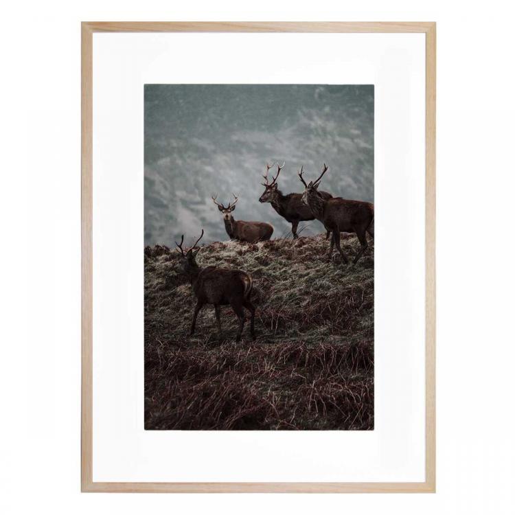 Running Wild - Print