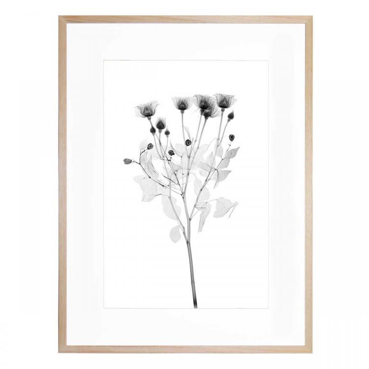 Rose 5 - Print