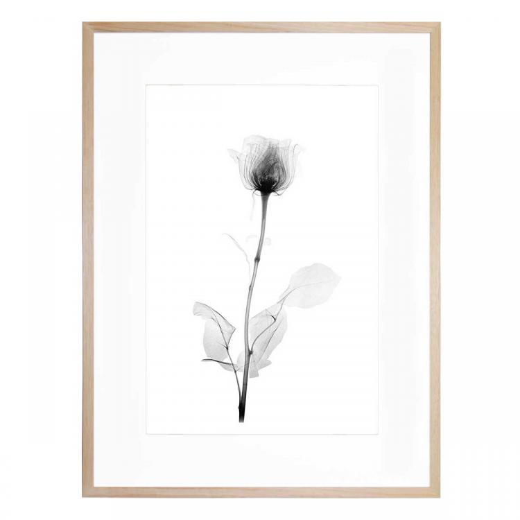 X-Ray 10- Print