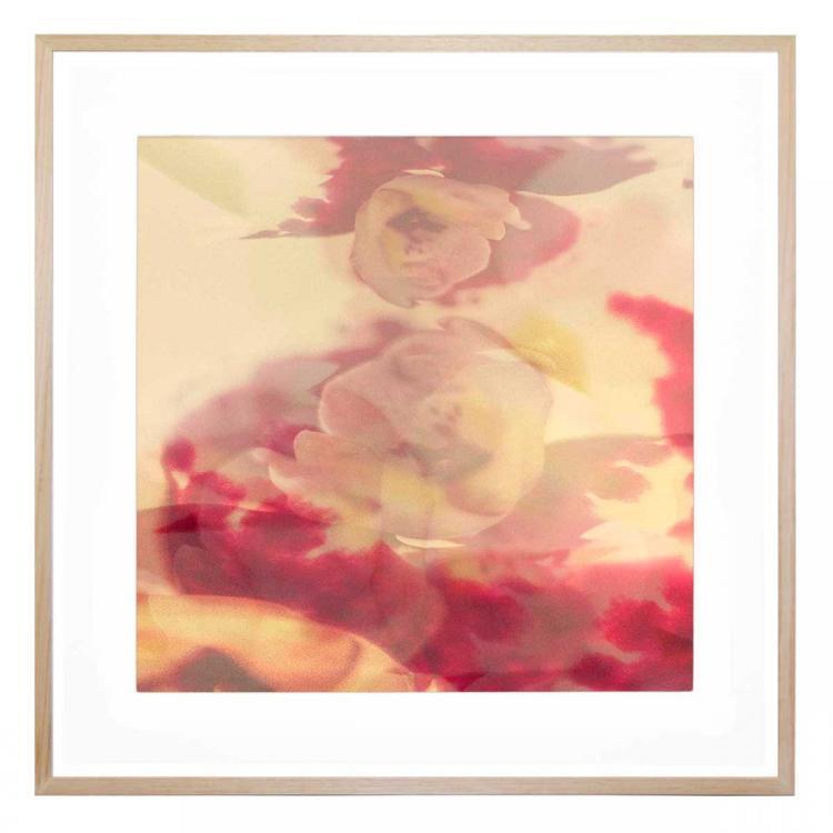 Orchidea Stampa Chiara - Print