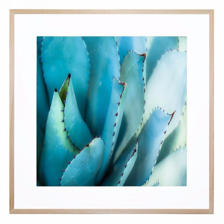 Agave Centrale