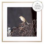 The Bird Watch - Print