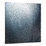 Sardines Firework - Print