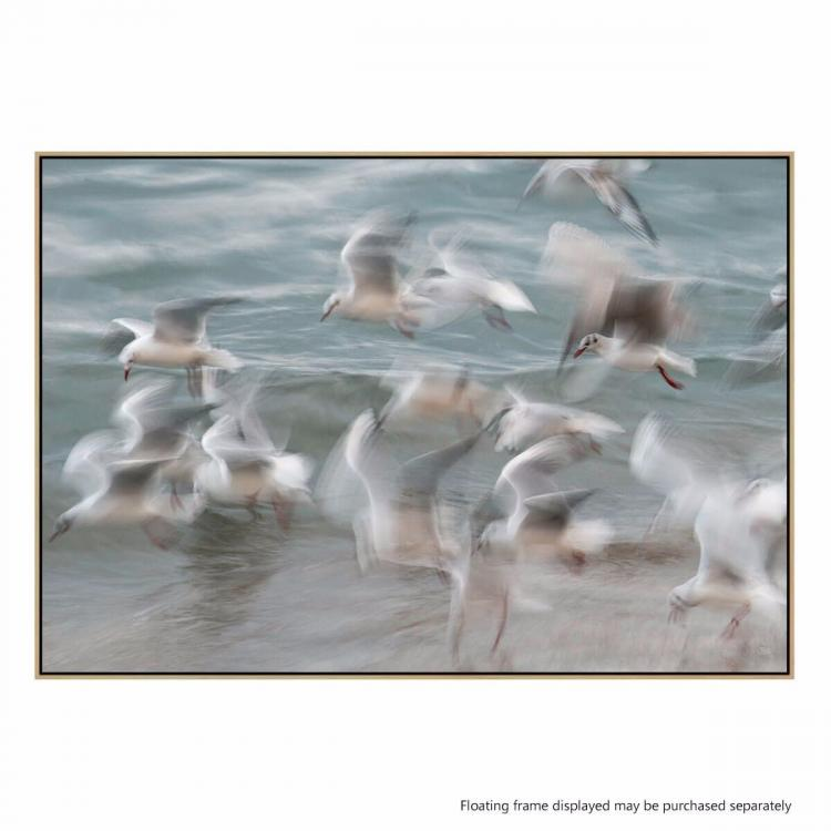 Birds - Print