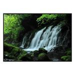 Treescape Fall - Canvas Print - Black Frame - ONE ONLY